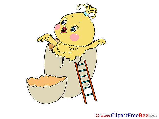 Egg Chicken Clipart Birthday Illustrations