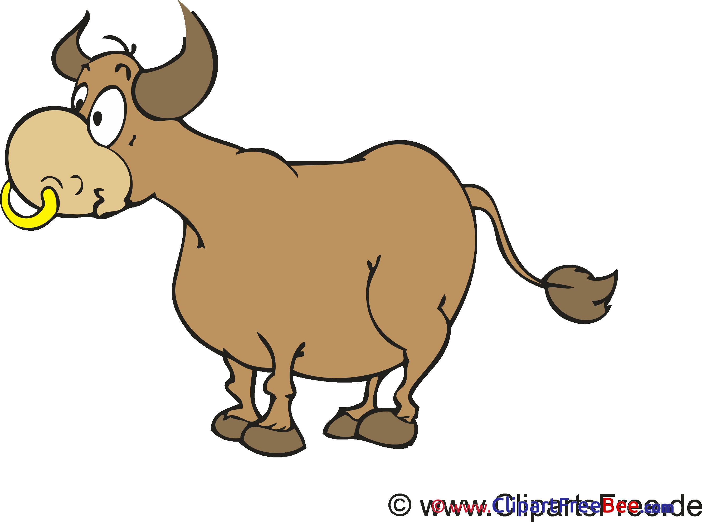 Bull Pics free download Image