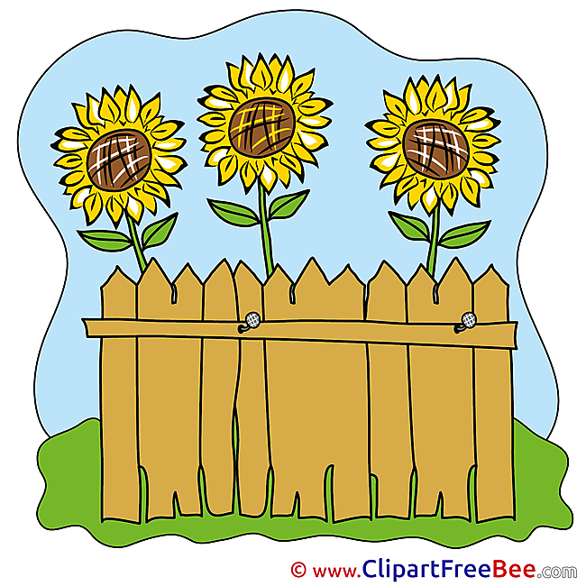 Fence Sunflowers Pics printable Cliparts