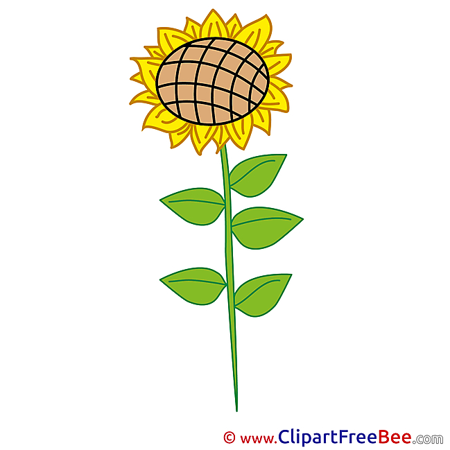 Flower Sunflower Cliparts printable for free