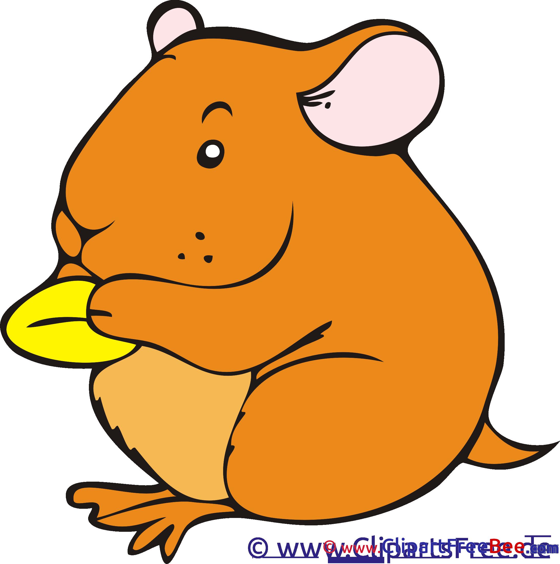 Hamster download printable Illustrations