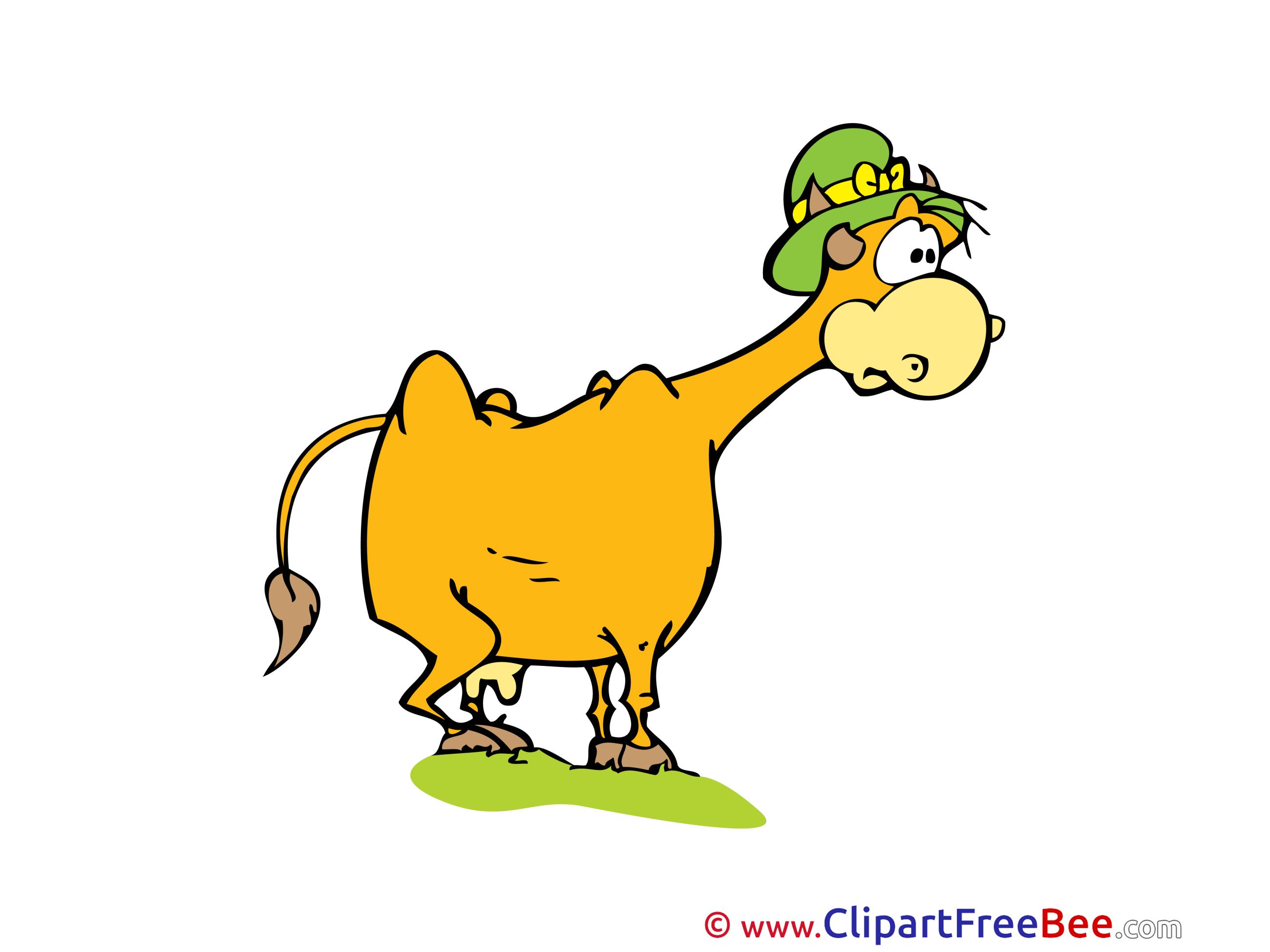 Hat Cow Pics printable Cliparts