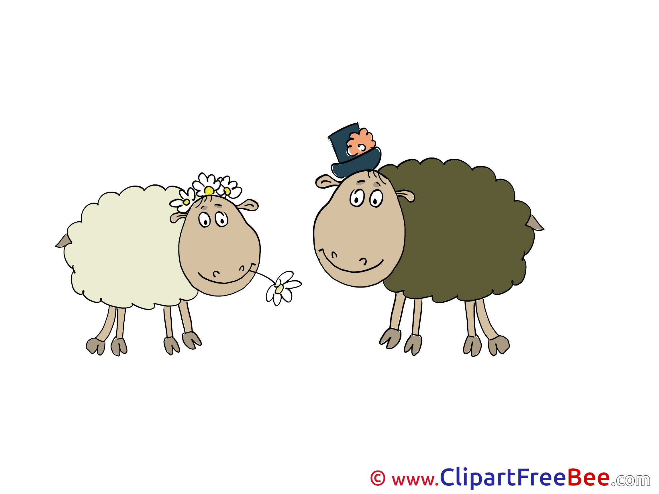 Sheeps Images download free Cliparts