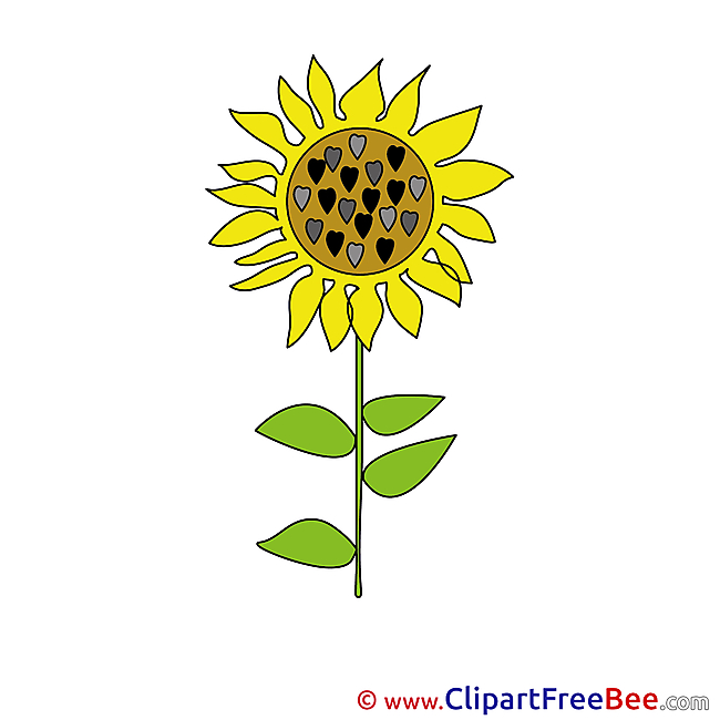 Sunflower free Illustration download