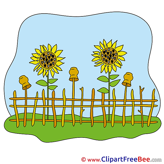 Sunflowers Fence Pics download Illustration