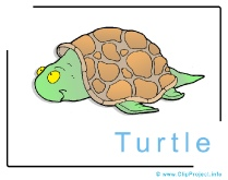 Turtle Clip Art Image free - Animals Clip Art Images free