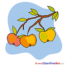 Apples Pics Autumn free Cliparts
