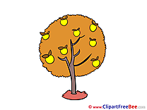 Apples Tree download Clipart Autumn Cliparts