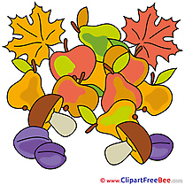 Fruits Pics Autumn Illustration