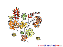 Herbarium Clipart Autumn Illustrations
