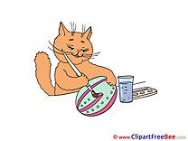 Egg Easter Cat Pics download Illustration