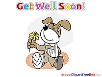 Gypsum Dog Flower free Illustration Get Well Soon