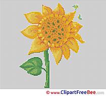 Sunflower Cross Stitches free