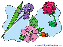 Garden Flowers Clipart free Illustrations