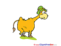 Hat Cow Pics printable Cliparts