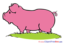 Pig Grass Pics free Illustration