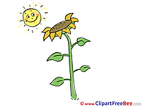 Sun Sunflower download Clip Art for free