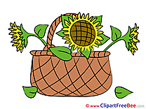 Basket with Sunflowers Pics Flowers free Cliparts