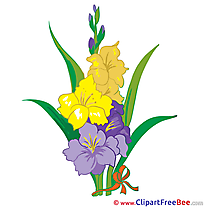 Hibiscus Clipart Flowers Illustrations