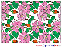 Pics Wallpaper Flowers free Cliparts