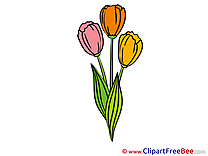 Tulips free Cliparts Flowers