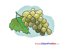 Bunch Grapes printable Illustrations for free