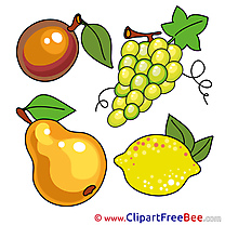Drawing Fruits Clipart free Illustrations