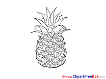 Exotic Fruit Ananas download Clip Art for free