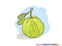 Guava free Illustration download