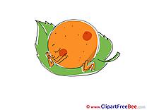 Mandarin Images download free Cliparts
