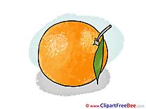 Orange Pics free download Image