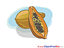 Papaya free printable Cliparts and Images