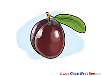 Plum Clip Art download for free