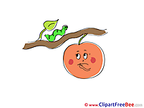 Worm Branch Fruit Pics free download Image