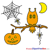 Holiday Owl Web Spider Moon Pics Halloween Illustration