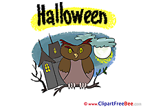Owl Clipart Halloween Illustrations