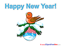 Bullfinch Ball Pics New Year Illustration