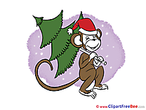 Fir Monkey Pics New Year free Cliparts