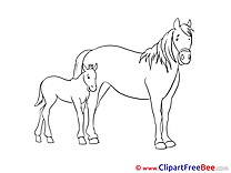 Foal Horse Clip Art for free