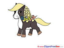 Little Pony Pics Horse Illustration