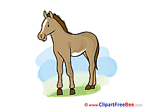 Mare printable Horse Images