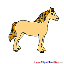 Pics Animal Horse free Image