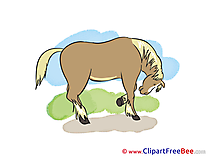 Pics Horse free Image