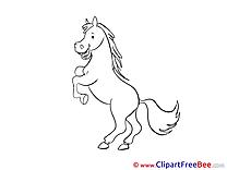 Stallion Horse download Illustration
