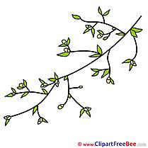 Buds Spring Branch Pics download Illustration