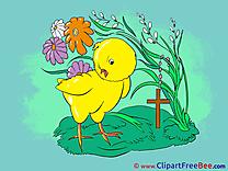 Chicken Grass Flowers Pics download Illustration