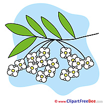 Drawing Branch Flowers free Illustration download