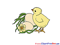 Eggs Chicken Clipart free Illustrations