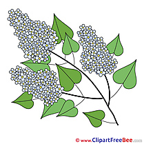 Lilac Pics printable Cliparts