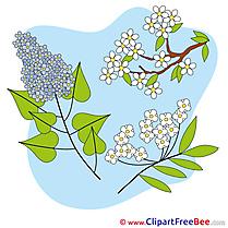 Spring Flowers Pics free Illustration